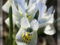 spring_2709