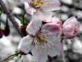 spring_4845