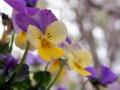 spring_4850