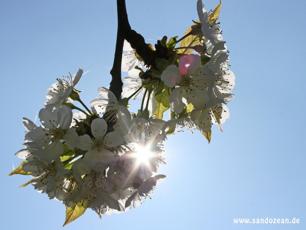 spring_3017