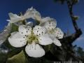 spring_0032