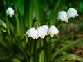 spring_2389