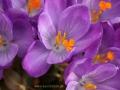 spring_2677