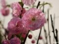 spring_3049
