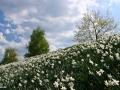 spring_3709