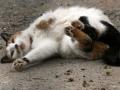 cats_5396