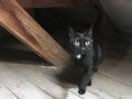 cats_0214
