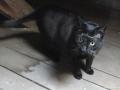 cats_0258