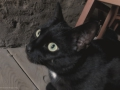 cats_0305