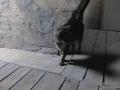 cats_0312