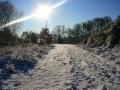 winter_2388