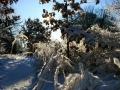 winter_2468
