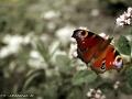 butterfly3_1440
