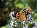 butterfly_1280
