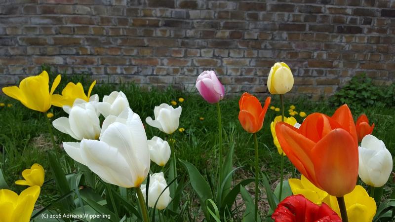 spring20160423_151345
