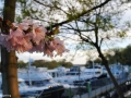 spring20160416_191130